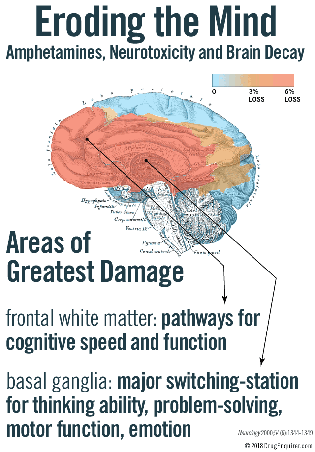Eroding the Mind. Amphetamines, Neurotoxicity and Brain Decay. Areas of greatest damage: Basal ganglia is in the deepest inner region of the brain and acts as a major switching station for thinking ability, problem solving, task flexibility, motor function and emotion. Frontal white matter provides communication pathways for cognitive speed and cognitive function.