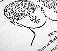 dictionary illustration of phrenology brain